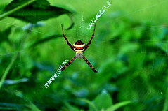 Spider Web (Natureholic001) Tags: spiderweb natureholic bangladesh lawacharanationalpark srimongal