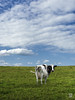 _8014326 retouche.jpg (sylvain.collet) Tags: horizon france olympus hautevienne pinkfloyd nature atomheartmother vide rien paysage limousin empty nuages clouds