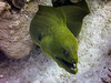 Meeting up with an old friend. (HarryMiller002) Tags: underwater scuba moray eel caribbean diving caymanbrac cayman