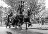 Horsepower (Emil de Jong - Kijklens) Tags: hors horses paard paarden blackandwhite zwartwit dieren alkmaars ontzet feest kennemerpark straat rijtuig fries tweespan bartje
