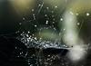 bokeh web (marianna_a.) Tags: halloween macro hmm bokeh spider web fly composite mariannaarmata water drops abstract macromondays