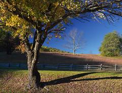 Autumn landscape (Tim Ravenscroft) Tags: autumn fall peaksofotter blueridgeparkway trees landscape hasselblad hasselbladx1d x1d