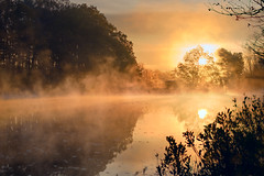 November (Chancy Rendezvous) Tags: november pond lake water fog mist sunrise trees forrest reflection frost chancyrendezvous