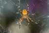 I think it's time for a autumn clean (Mark Wasteney) Tags: spider web arachnid happyarachtober ha 4th closeup upclose macro wildlife