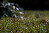 sea of reflecting drops (human_wildlife) Tags: drops sea reflection light many tousands water small tiny grass meadow morning dew nature park end summer sony a6000 85mm samyang greatshot