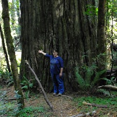 The Tree and Me (BriarCraft) Tags: redwood selfie tree