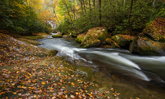 October (Jon Ariel) Tags: october livingwatersministries transylvaniacounty nc northcarolina water creek forest