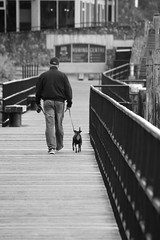 IMG_1422 (TMM Cotter) Tags: man dog walking selkirk waterway gorge victoria bc boardwalk monochrome