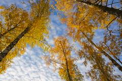 Autumn / Höst (shemring) Tags: hostfoto höstfoto