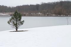 march 03 2017 (avflinsch) Tags: ifttt 500px lake spring tree summer fall history seasons
