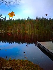 Tossing leaves in the air and being a child for a moment (evakongshavn) Tags: leaf leaves autumn fall colors colorful lake landscape landscapephotography water waterscape reflection 7dwf serene forest wood sky tree grass reflections