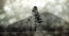 together we stand . . . (YvonneRaulston) Tags: surreal new zealand nz atmospheric art creativeartphotography calm dream emotive texture peaceful fineartgrunge fog soft green photoshopartistry mist moody moments morning sony tree trees hill country birds