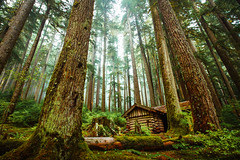 Sol Duc Shelter (James*J) Tags: log landscape woods cabin outdoor pnw fir clouds salal wa sole forest duc rainforest green lichen olympic duck building serene nature mist trunk northwest peninsula tree soleduck architecture washington sol fog pacific valley fotocompetition fotocompetitionbronze fotocompetitionsilver fotocompetitiongold