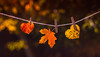 loving fall (auntneecey) Tags: fall autumn leaves heart love lovingfall 365the2017edition 3652017 day294365 21oct17