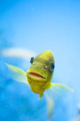 Aquarium. (LisaDiazPhotos) Tags: aquarium african fish aqua ocean sea lisadiazphotos