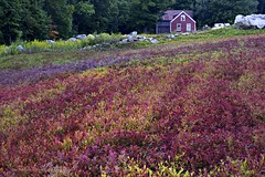 On Vienna Mountain (joyolsonnichols) Tags: nichols viennamountain blueberryfields outdoors country landscape vienna maine mainescenes
