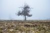 """Dernières larmes (""""chrisphotographie"""") Tags: photographie automne autumn mist mélancolie melancoly brouillard"""