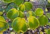 Leaf magic (vietnamvera) Tags: westonbirtarboretum autumncolour autumn autumnleaves trees acers acerleaves