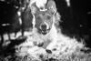 Steam (Radosław Owczarczak) Tags: jackrussellterrier steam jrt dog mydog pup bw blackandwhite dogs light eyes animal animals animaleyes fun