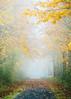 An Autumn Walk (John Westrock) Tags: autumn fall nature fog path autumncolors fallcolors trees pacificnorthwest washington canoneos5dmarkiii canon135mmf2lusm