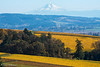 Dundee Hills Wine Country (stanhellmann) Tags: winecountry mthood vineyards nikond610 breath taking landscapes