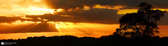 Red Sky (raven fandango) Tags: red sky orange sunset holt farm hertfordshire october 2017 amber british canon countryside eos england english weather clouds 70d tamron 600mm 150600 evening herts landscape light beam sun nature photography photo photos panarama panoramic scene country senic tree uk view wide