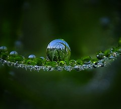 Upside down droplets and a straight reality. (abhishekskumar) Tags: water drop droplet droplets reflection reflectionstory nature natureza redgreen planetearth motherearth mothernature grass waterlove cool naturelover flickrdaily flickrlove macro macrophotography love macrolife