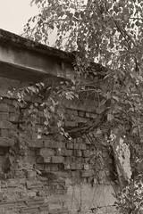 _MG_1223 (daniel.p.dezso) Tags: reclaim szeged laktanya orosz szegedi former soviet barrack elhagyatott urbex abandon ruin building abandoned military base militarybase