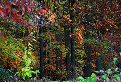 painted (Jen_Vee) Tags: trees fall foliage autumn woods leaves colors spectrum nature