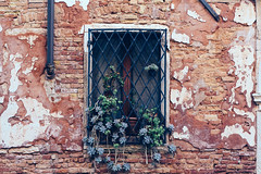 Spill (A><EL) Tags: venice venetia venezia italy italia europe travel old flower plant window wall ruined rustic canon 700d 50mm hungarian