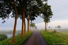 Walk a Dream (Johan Konz) Tags: summer misty sunrise sky clouds green grass trees rural road outdoor landscape atmosphere nikon d90 purmerland waterland netherlands tree light sun sunlight field serene water watercourse fence dream dreamy