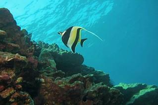 high reef