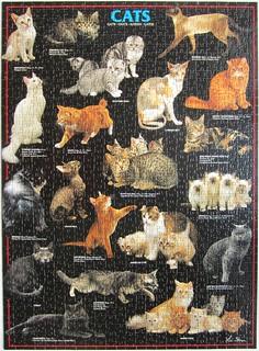 Cats & Cats (Lia Stein)