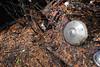 DSC_0591 v2 (collations) Tags: ontario mcleansautowreckers autowreckers wreckers automobiles autos abandoned rockwood derelict junkyards autograveyards carcemeteries