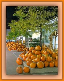 Hills Of Pumpkins