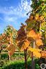 Weinberg Metzingen (MSPhotography-Art) Tags: autumn wein landscape landschaft nature vineyard germany stimmung schwäbischealb weinberge herbstlich natur clouds blätter leaves deutschland golden badenwürttemberg metzingen cloudscape cloud trekking farben outdoor weinberg albtrauf alb wandern herbst de