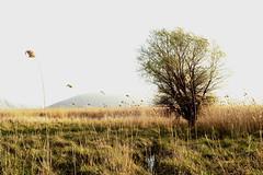 Windy field colors by ioanna papanikolaou DSC_1070_2620 (joanna papanikolaou) Tags: landscape scape nature natural scene scenery field windy fall grass autumn trees nobody outdoors pasture peaceful colors beautiful macedoniagreece makedonia timeless macedonian macédoine mazedonien μακεδονια македонија
