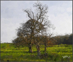 Sketching The Trees And Hills.....Tree Trio (Picture post.) Tags: landscape nature green trees fields hills sketch art paysage arbre