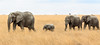 Planet Earth First ! (AnyMotion) Tags: unclimateconference cop23 africanelephant afrikanischerelefant loxodontaafricana elephants elefanten savannah savanne 2015 anymotion serengetinationalpark tanzania tansania africa afrika travel reisen animal animals tiere nature natur wildlife 7d2 canoneos7dmarkii ngc npc