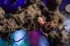 Manifestations - Edwin Smits-89 (Manifestations_) Tags: manifestations eindhoven ddw ddw17 dutchdesign art mediaart kunst mediakunst fashion efashion wearables future innovations innovation