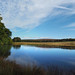 longshaw pond
