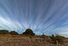 Crazy Clouds. (bob_katt) Tags: cloud coast beach sky sand trees kapiti coastline paraparaumu northisland newzealand canon eos500d driftwood rope norfolk pine