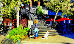 Patiently waiting for snow in Whistler Ski Village? :-) (peggyhr) Tags: peggyhr dogs woman autumn umbrellas trees leaves sunlight shadows hff red green yellows orange railings dsc08980d whistlerskivillage bc canada
