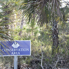 j_holland_2 (Sail.sr5) Tags: select nature trees fgcu florida woods swfl conservation area fwc hurricane irma post photography palm tree oak trail