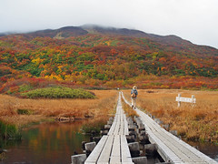 a marsh in autumn (murozo) Tags: ryugahara marsh mountain mtchokai autumn tint grass tree nature yurihonjo akita japan 竜ヶ原湿原 湿原 山 鳥海山 秋 紅葉 草 木 自然 由利本荘 秋田 日本