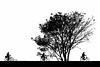 Bicycle Race (ARTUS8) Tags: flickr kontrast menschen swo2farbig sport überbelichtet baum schwarzweis silhouette scherenschnitt highkey norderney