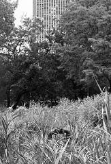 (VonLiviu) Tags: chicago city bw blackandwhite film shootfilm kodak tmax develop art nature chicagophotographer grain moody dark summer hot nikon nikonphotography nikonfe fe geometry framing composition cityscape