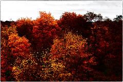Autumn ( through my window ) (-Visavis-) Tags: autumn kyiv ukraine canoneos5d solarisation foliage trees canonef70200mmf4lusm art
