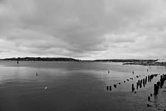 Cloudy Sunday at the harbor! (ineedathis, Everyday I get up, it's a great day!) Tags: oysterbay harbor rocks woodenpilings beach sea water rainy clouds trees tents sailboats longisland oktoberfest nikond750 monochrome blackwhite seascape ocean perspective