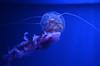 DSC_1662.jpg (albtormar1) Tags: artes concreto medusa ciencias félixcandela seaworld oceanografic ciudaddelasartesylasciencas hormigón valencia mundomarino españa arquitectura